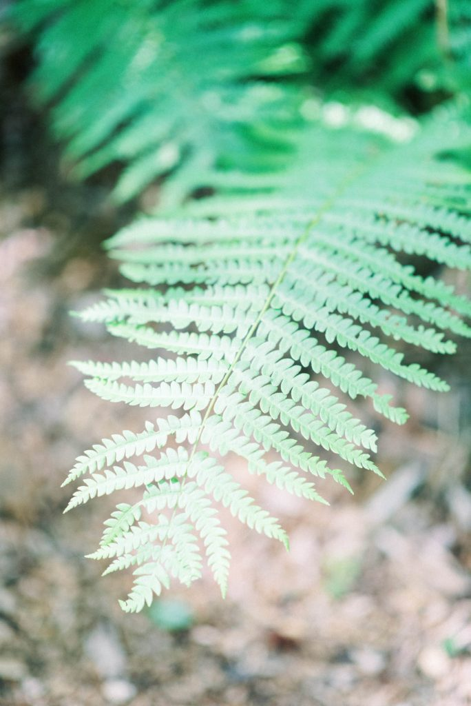 ferns at fernwood