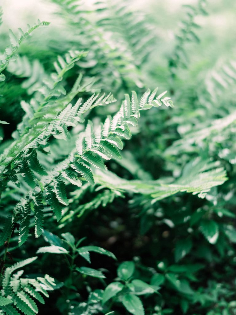 more ferns at fernwood